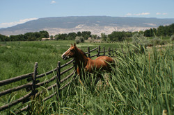 Healy Horse Mesa