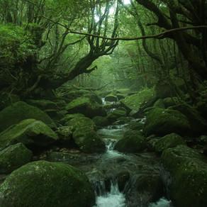 屋久島へ一泊二日で遊びに行く!