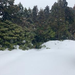 雪の永田岳に行ってきましたよ!(二日目)