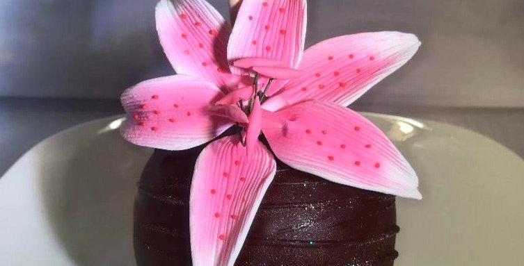 Lg Pink Stargazer