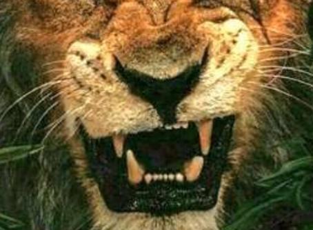 ライオンキング!