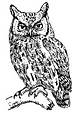 SNN owl prowl.png