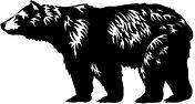 SNN bear.png