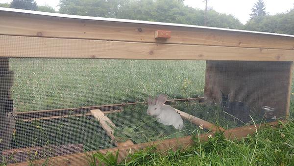 rabbit tractor 2020 A.jpg