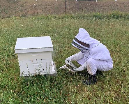 Bee keeper.jpeg