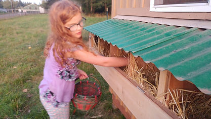 Randalyn gathering eggs 8.19.jpg