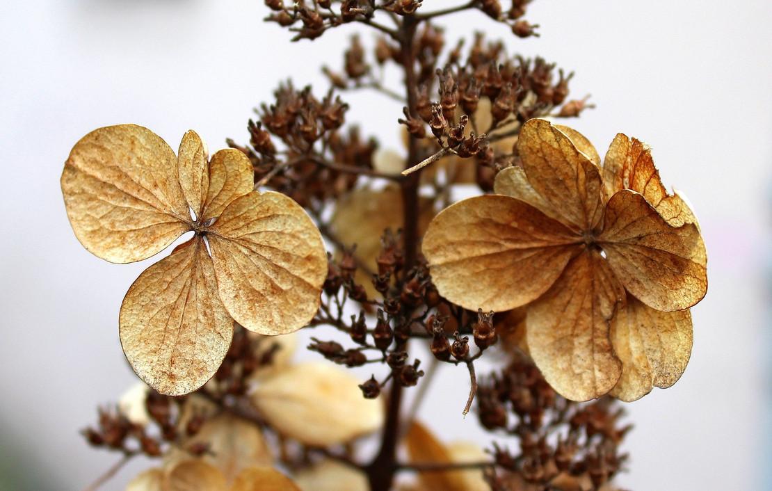 dry-flowers-3208837_1920.jpg