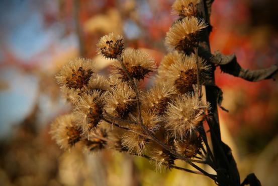 dried-flowers-3851257_1920.jpg