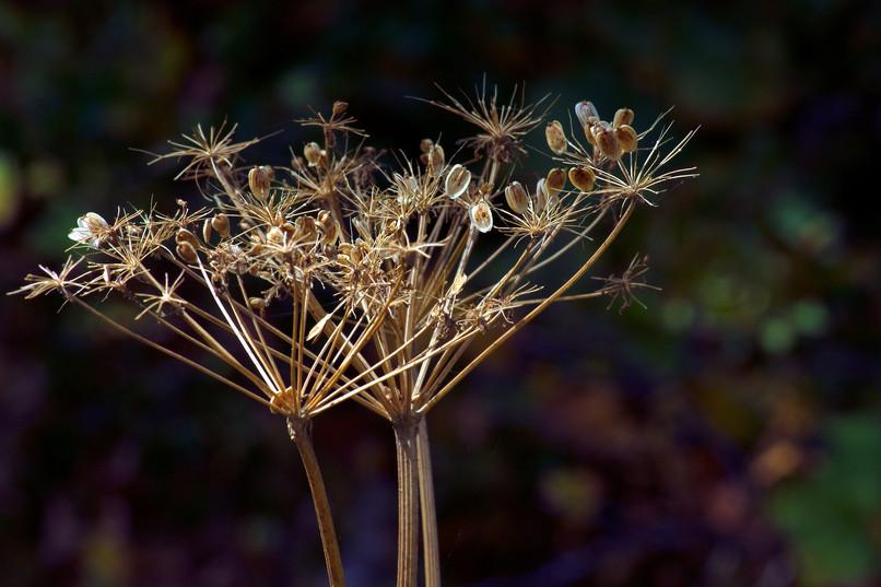 dried-wildflowers-3847717_1920.jpg