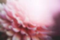 kari-shea-101978-unsplash.jpg