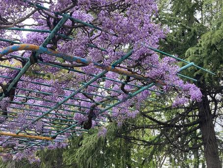 春日井市 茶道教室 友人とお散歩