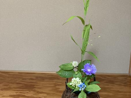 春日井市 茶道教室 清楚な茶花