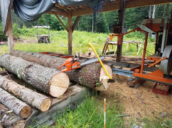 Logs ready to mill