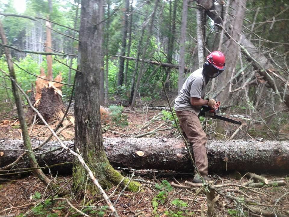 limbing big log