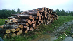 saw logs destined for the mill