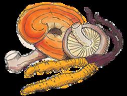 Papa Doc's TOnic has chaga, reishi, lion's mane, shiitake and cordyceps mushrooms