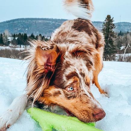 Hyper Pet's Chewz Stick with IG's onkoda