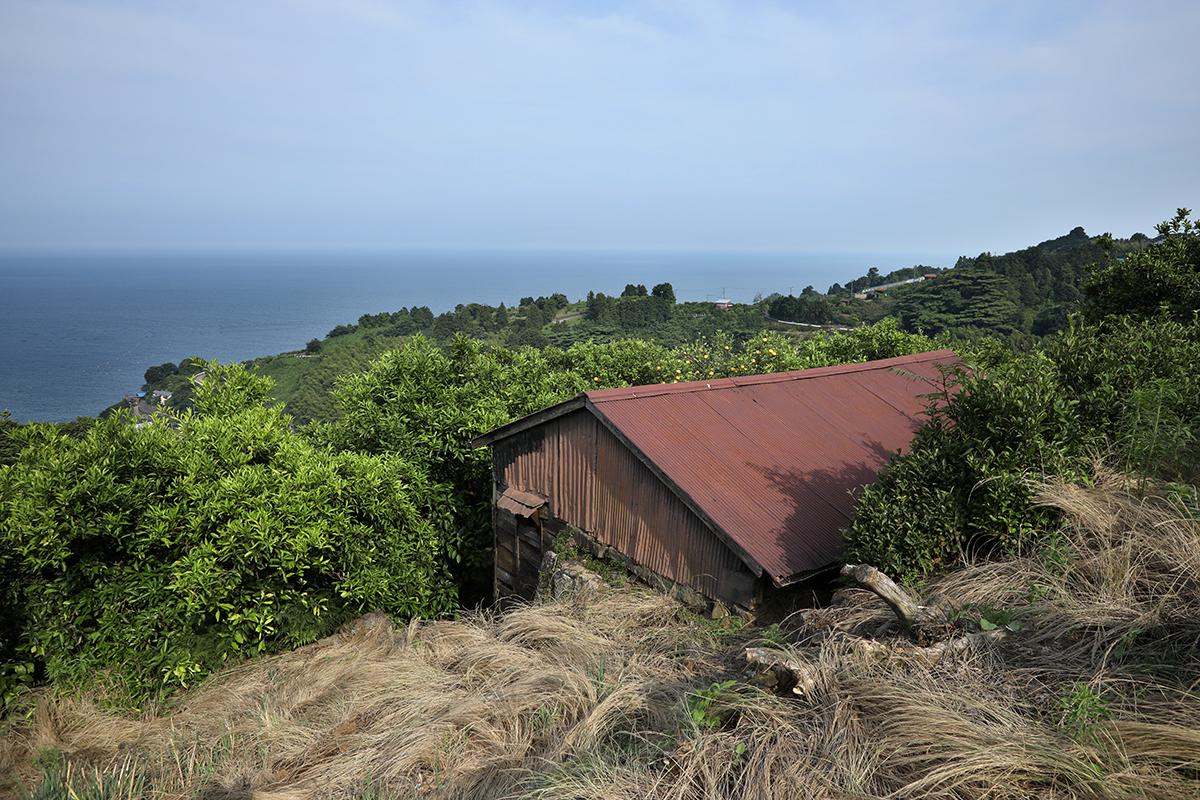 神奈川県小田原市 みかん畑の小屋