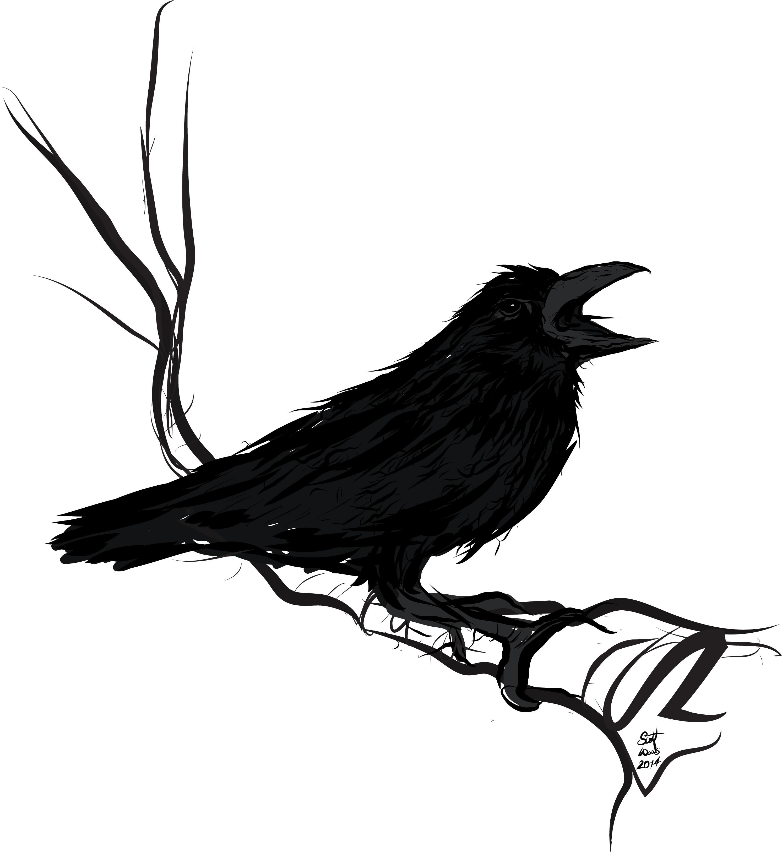 Raven_bird day