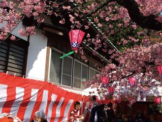 """沼津市浮島 """"第13回チャリティー桜祭り"""""""