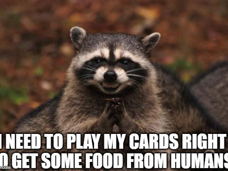 play one's cards right