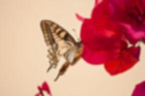 flower-3776451_1920.jpg