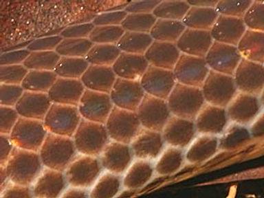 snakesunbeamscale.jpg
