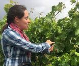 Guide dans les vignes.jpg