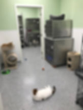 Cat room - April 2019.jpg