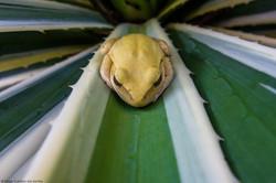 Paisagens | Animais | Plantas