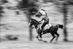 Cavaleiro Laçador