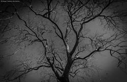 Noites de Inverno