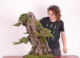 JC bonsai.jpg