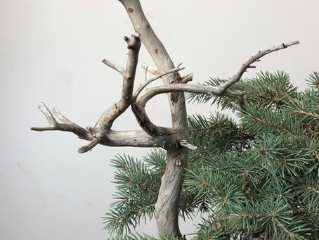 The Zen of Bonsai