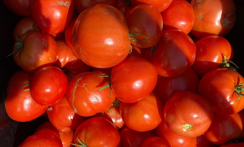 Slicing Tomatoes- $4 Per Pound