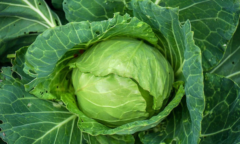 Cabbage - $3 Each