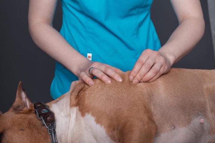 dog massage in vetorian clinic.jpg
