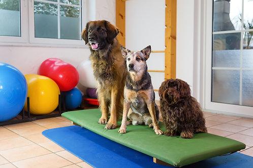 """""""Hunde Gymnastik physiotherapeutisches Muskel & Gelenktraining"""" EINZEL & GRUPPEN"""