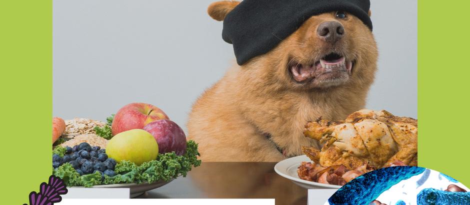 Futterumstellung bei IBD Hunden