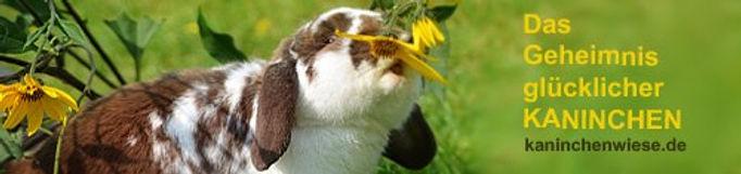 kaninchen-haltungstipps.jpg