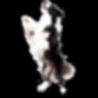 Bilder_Kr%C3%A4uter_Online%20(11)_edited