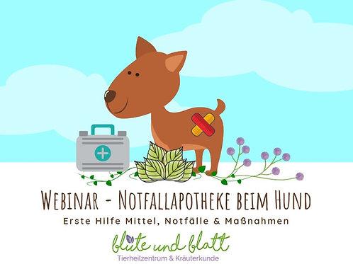 """""""Notfallapotheke beim Hund - natürliche Erste Hilfe Mittel"""" inkl.Video + Rezpete"""