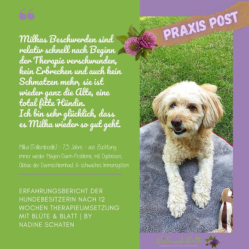 Kopie von Praxis Post Erfahrungsberich.p
