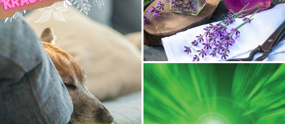 Entspannung & Ruhe durch olfaktorische und Farblichtkonditionierung