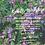 Thumbnail: Die ersten Frühjahrsboten kennen lernen & nutzen am 13.03.21