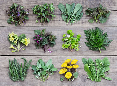 Edible plants and flowers, fresh spring