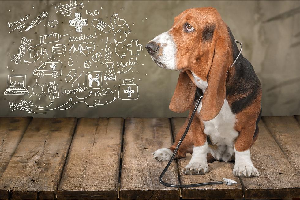 Dog health concept..jpg