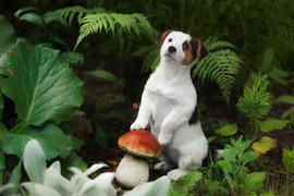 cute beautiful little puppy Jack Russell