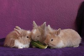 rabbit-426131_960_720.jpg