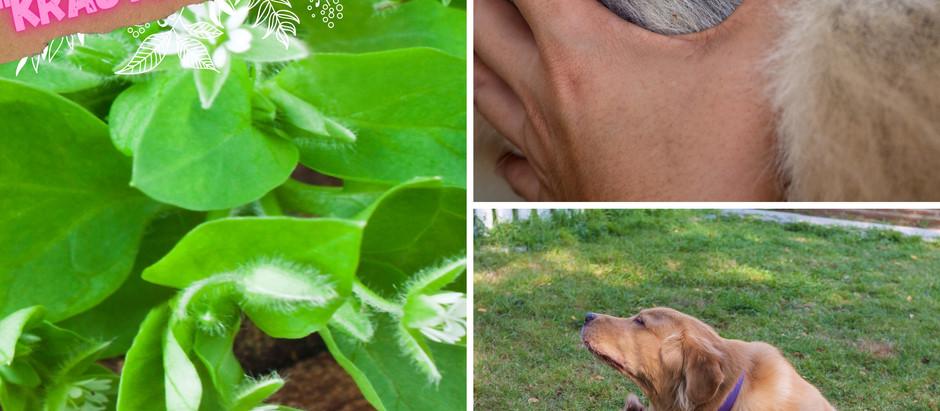 Juckreiz beim Hund - häufige Ursachen heute!